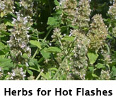 TN_Herbs_HotFlashes
