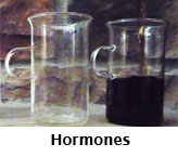 TN_Hormones